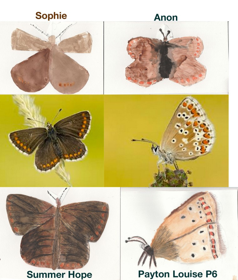 Paintings of Northern Brown Angus by the Pirniehall Primary School pupils