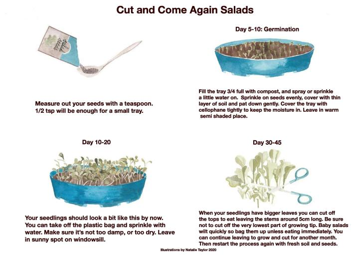 CUT AND COME AGAIN SALADS