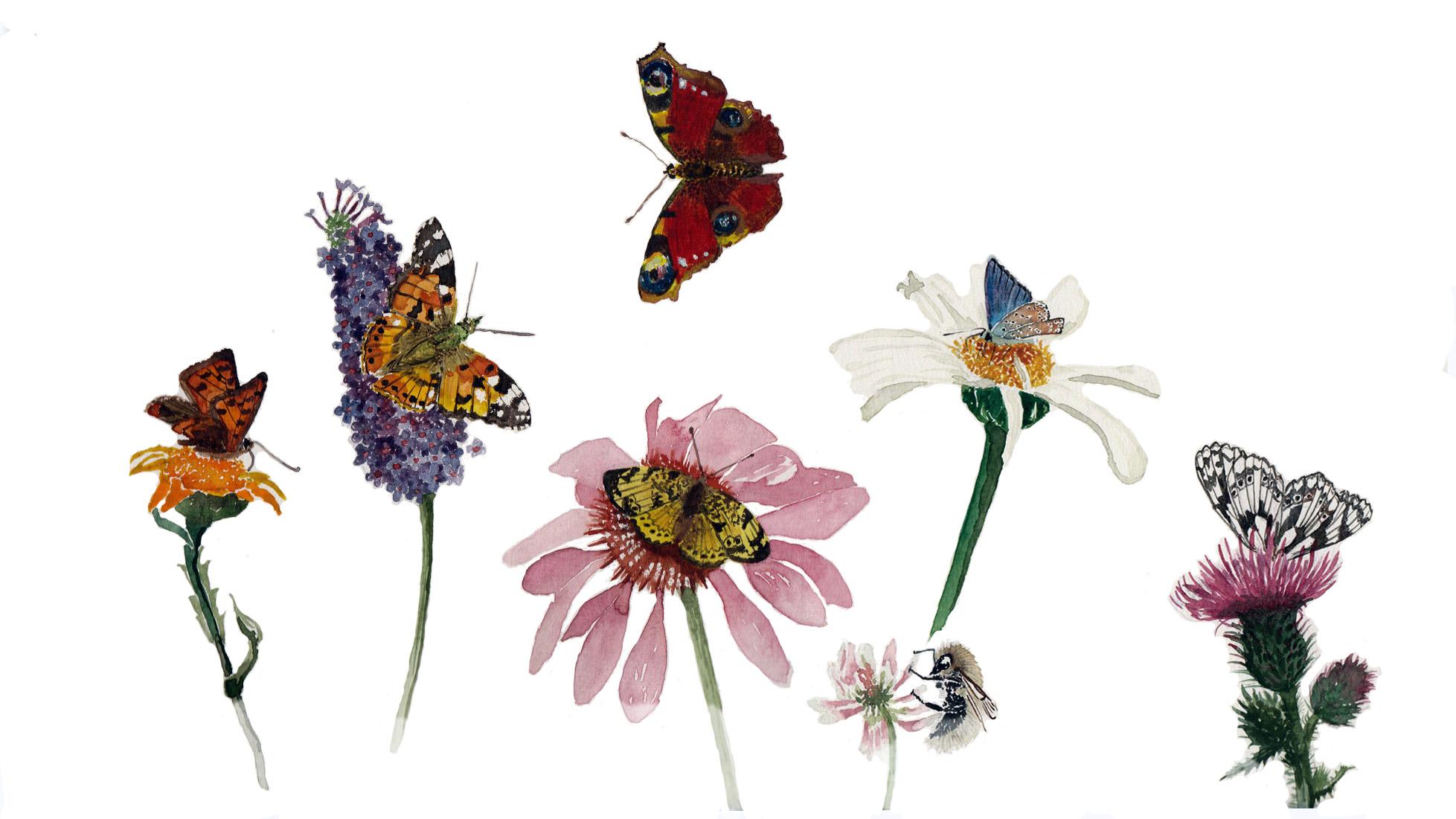 Butterflies-Natalie Taylor-updated